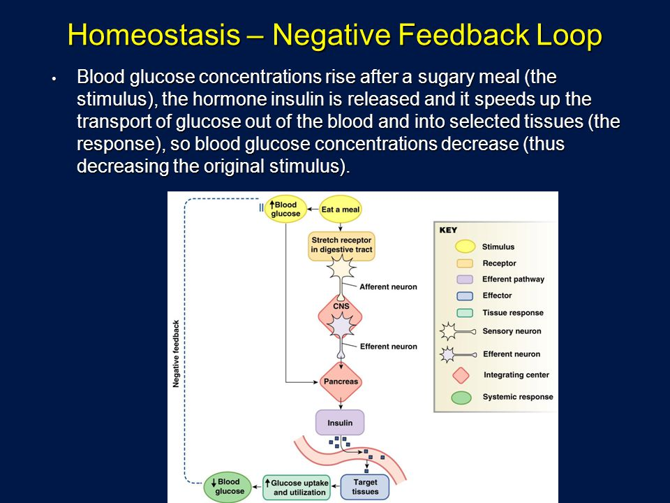 Homeostasis – Negative Feedback Loop