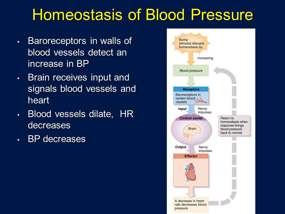 Homeostasis of Blood Pressure