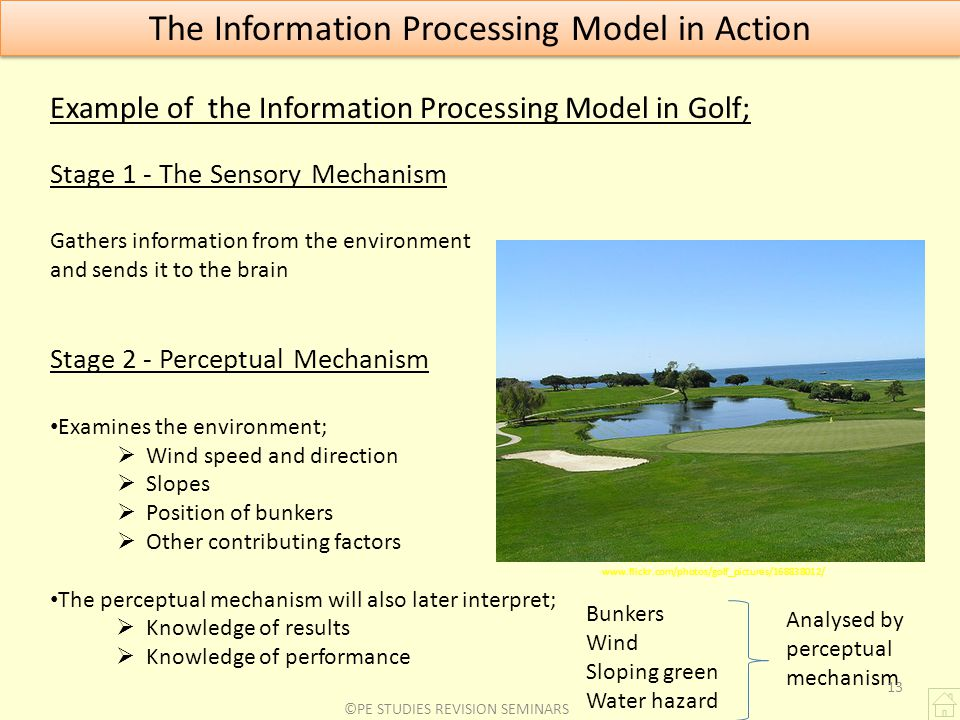 The Information Processing Model in Action