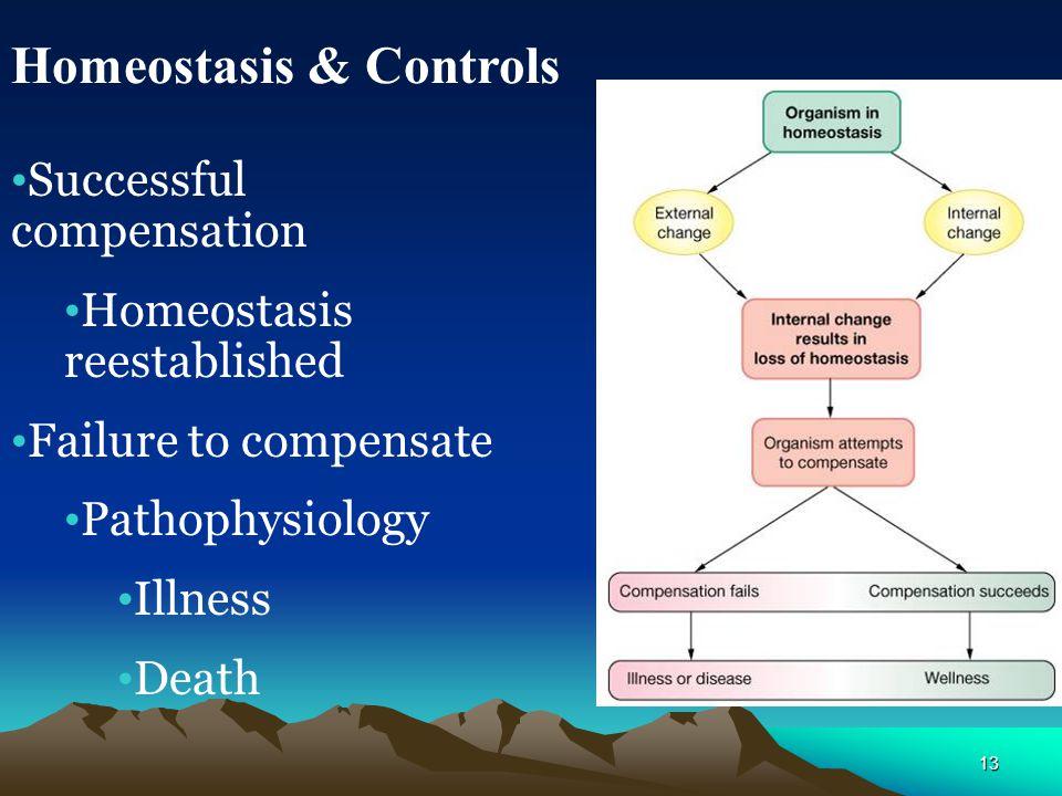Homeostasis & Controls