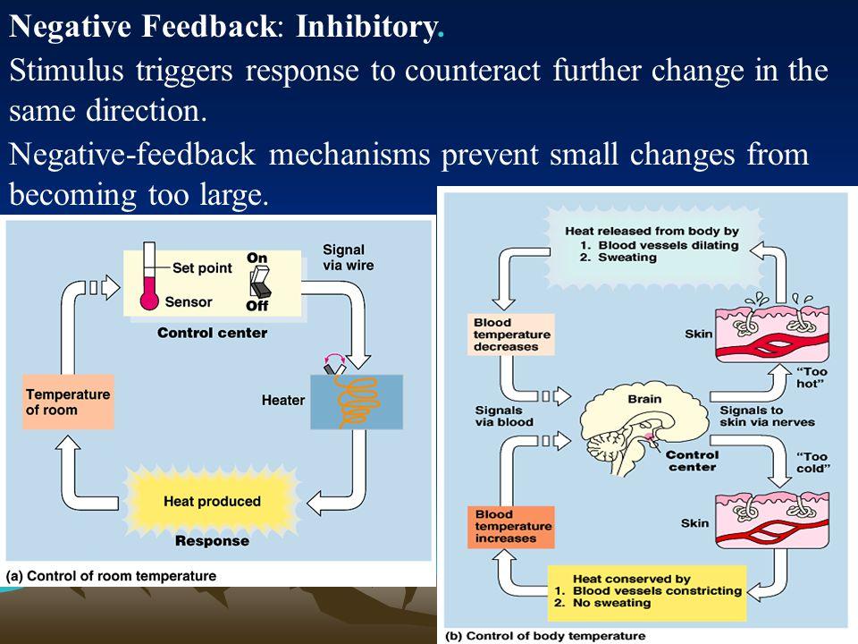 Negative Feedback: Inhibitory.