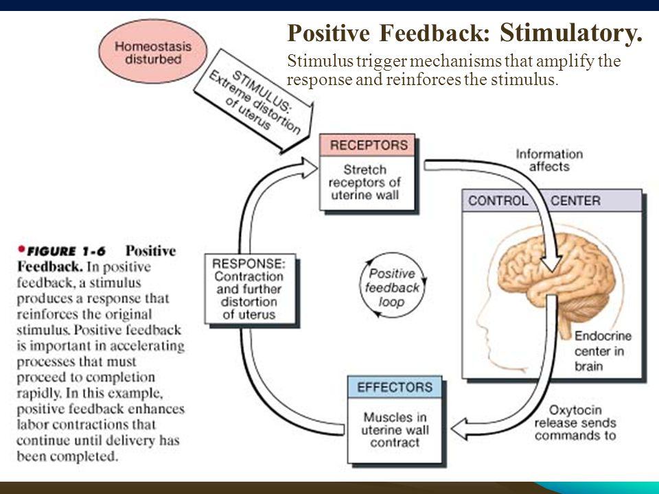 Positive Feedback: Stimulatory.