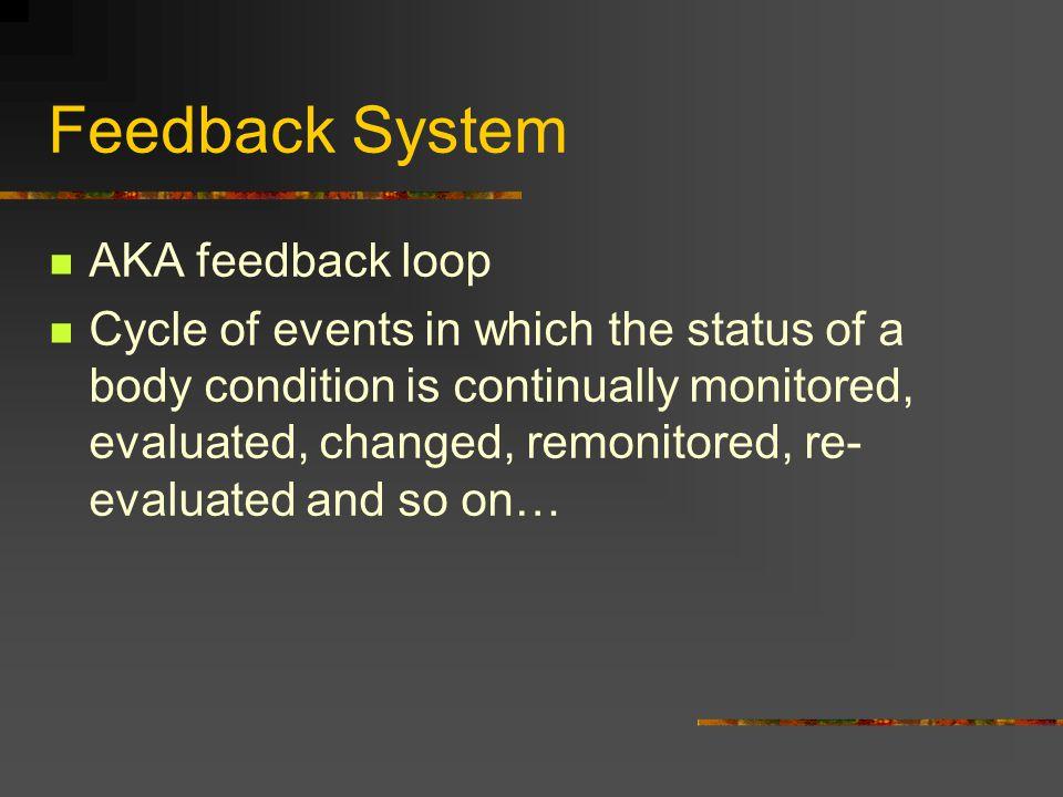Feedback System AKA feedback loop