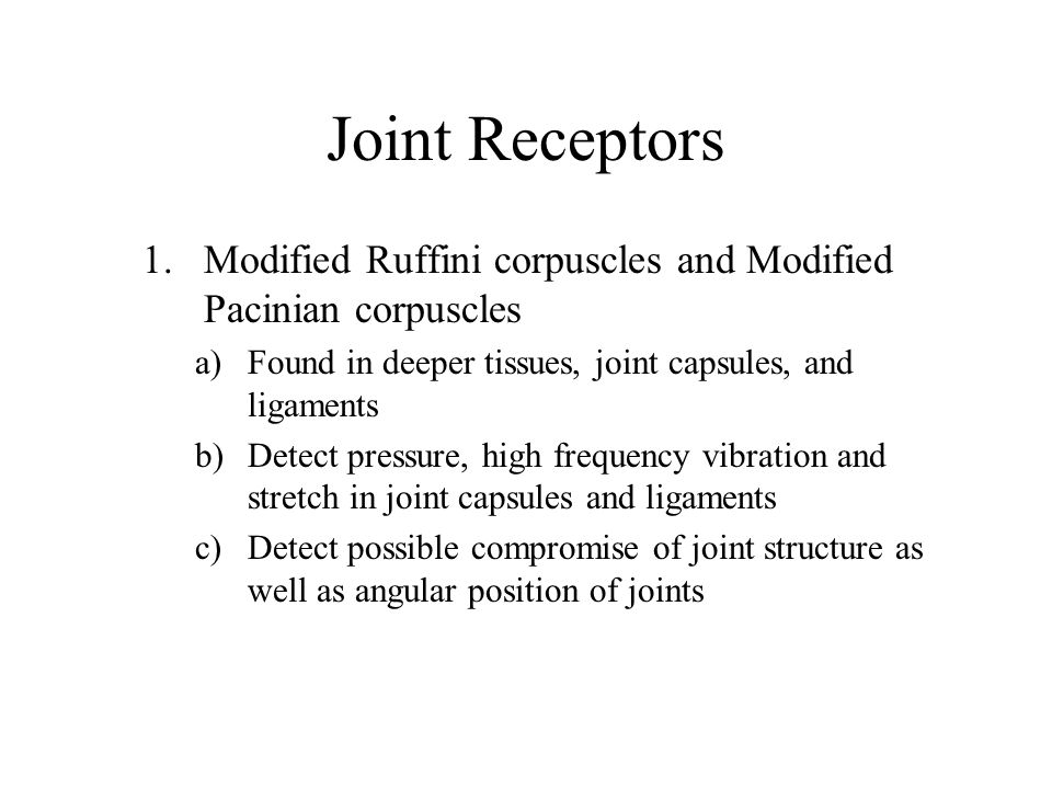 Joint Receptors Modified Ruffini corpuscles and Modified Pacinian corpuscles. Found in deeper tissues, joint capsules, and ligaments.