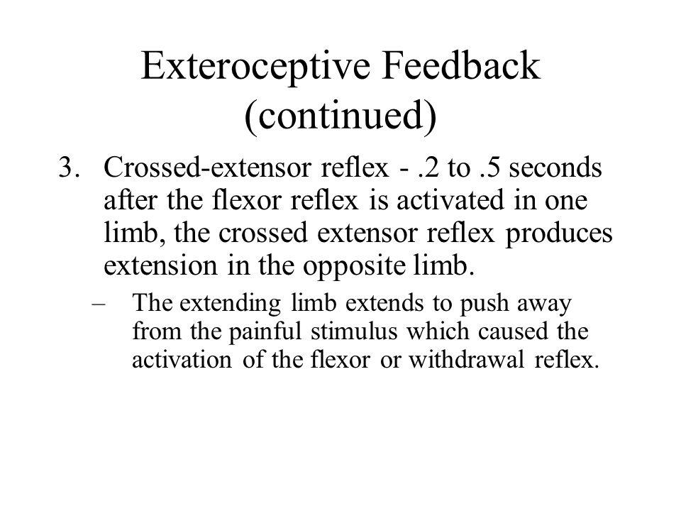 Exteroceptive Feedback (continued)