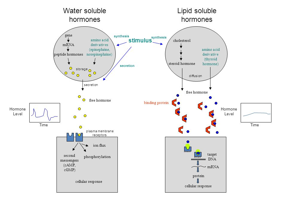 Water soluble hormones Lipid soluble hormones stimulus gene mRNA