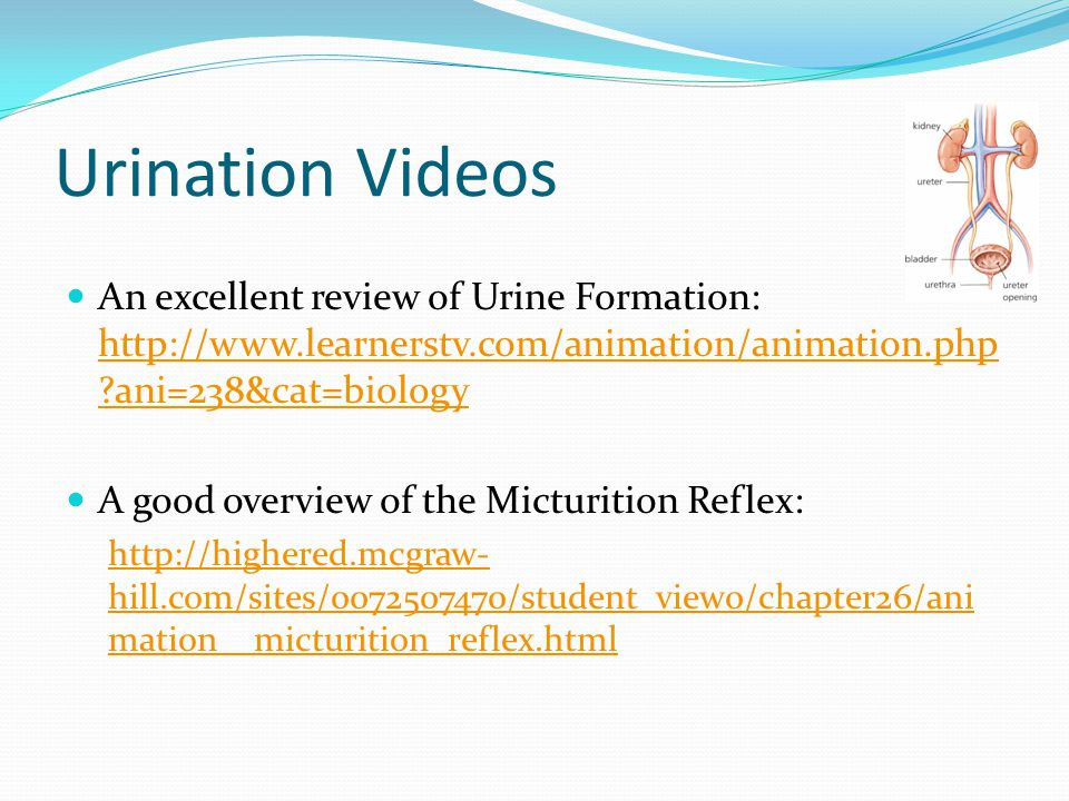 Urination Videos An excellent review of Urine Formation: http://www.learnerstv.com/animation/animation.php ani=238&cat=biology.