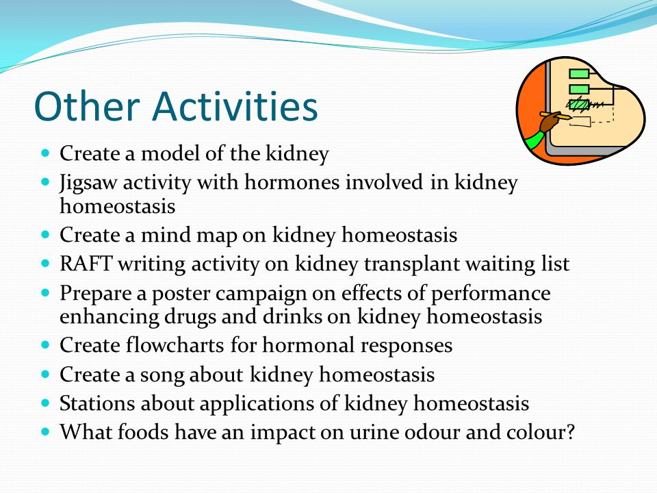 Other Activities Create a model of the kidney