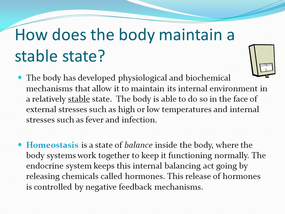 How does the body maintain a stable state