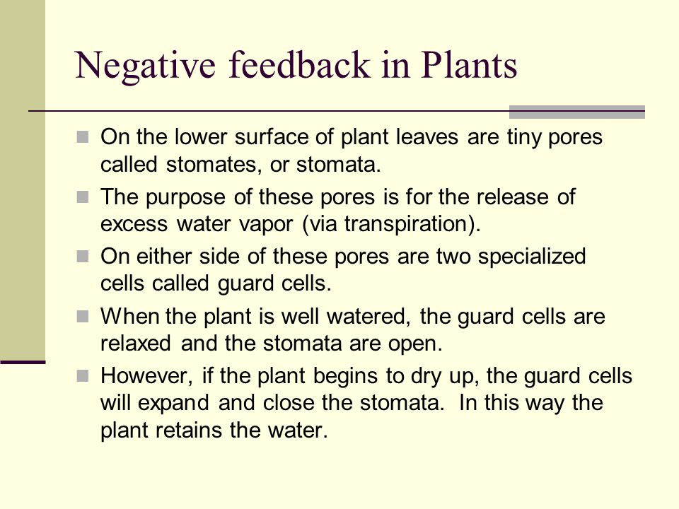 Negative feedback in Plants