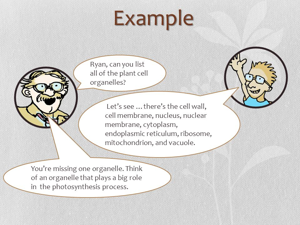 Example Ryan, can you list all of the plant cell organelles