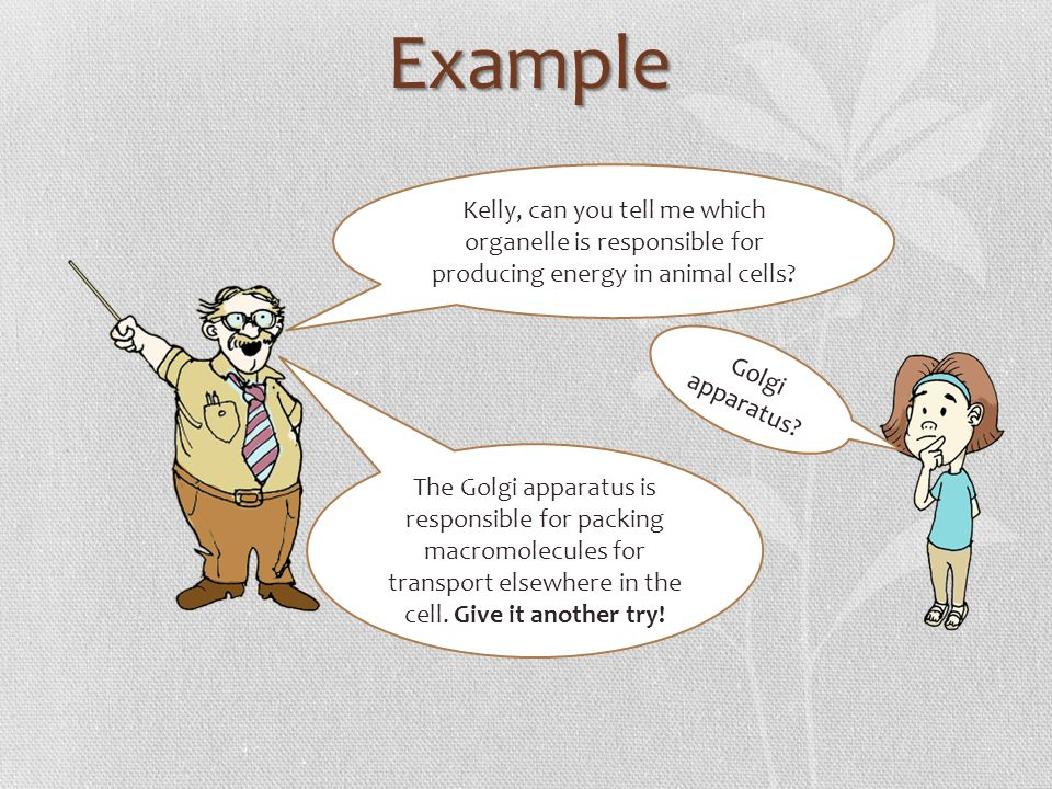 Example Kelly, can you tell me which organelle is responsible for producing energy in animal cells