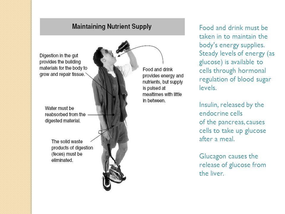 Food and drink must be taken in to maintain the body s energy supplies.