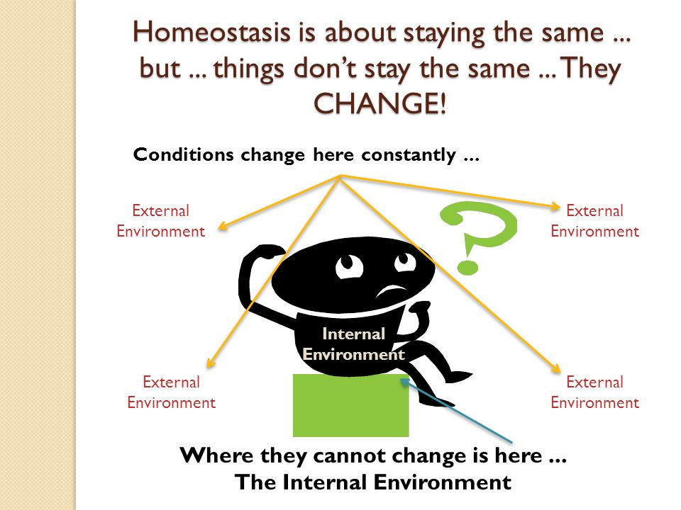 the principles of the homeostasis This powerpoint introduces students to the main principles of homeostasis, negative feedback and the waste products that need to be removed from the body.