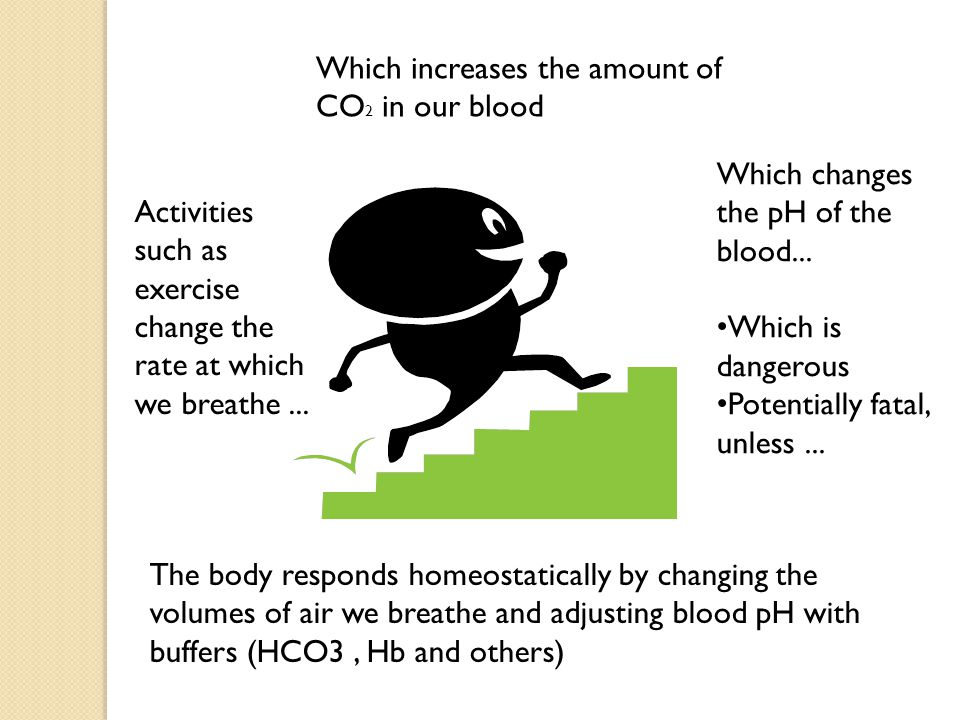 Which increases the amount of CO2 in our blood