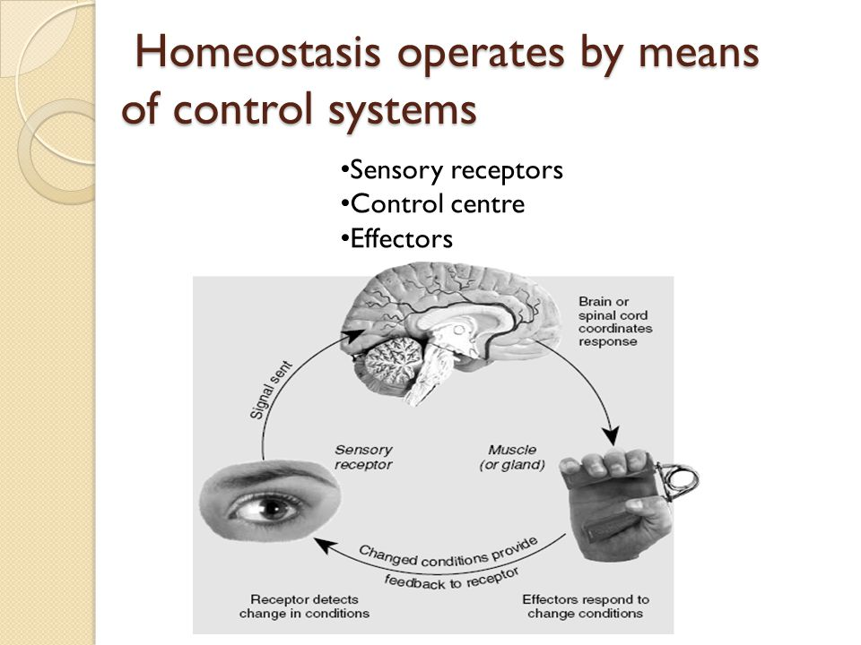 Homeostasis operates by means of control systems