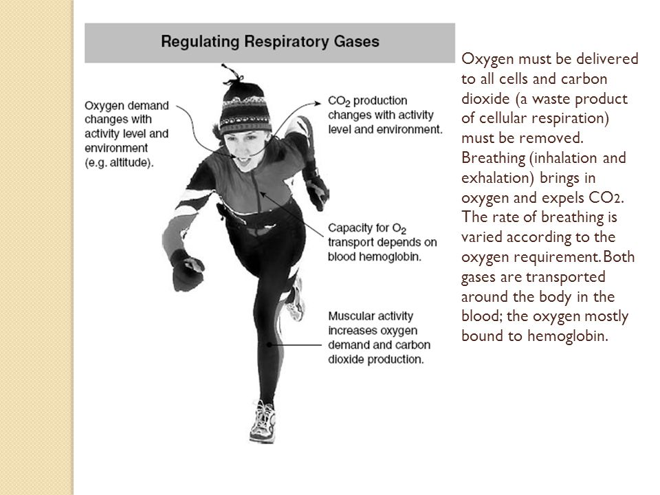 Oxygen must be delivered to all cells and carbon dioxide (a waste product of cellular respiration) must be removed. Breathing (inhalation and