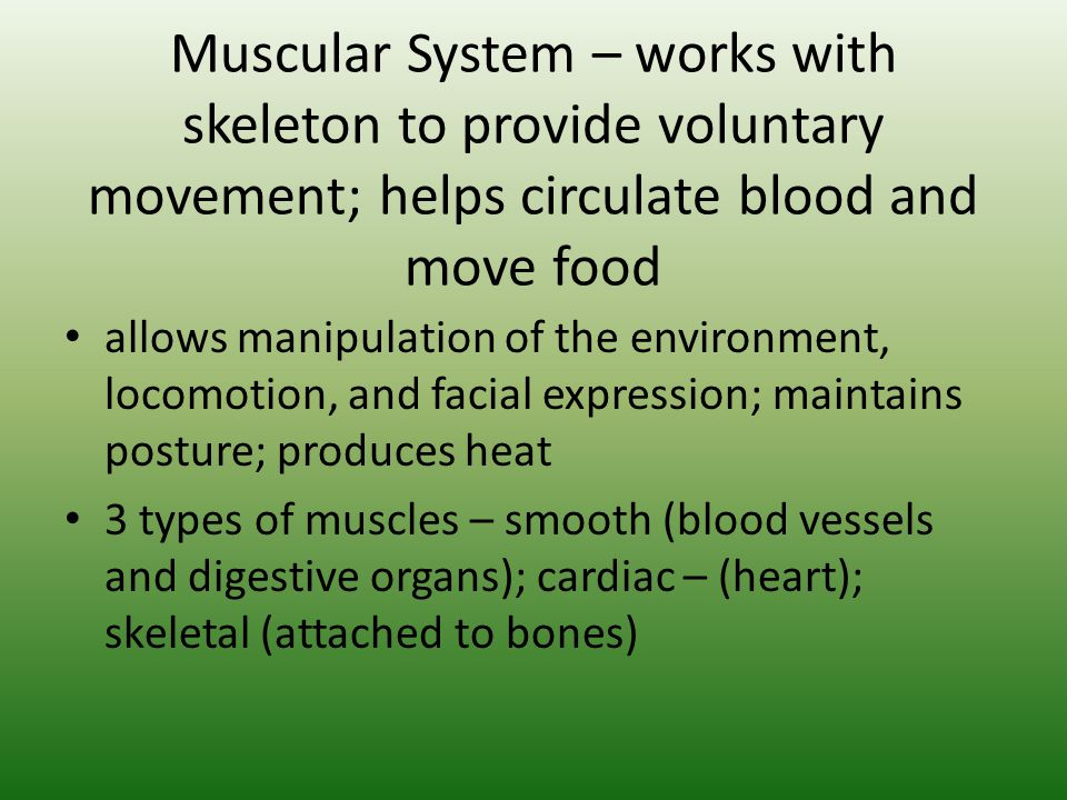 Muscular System – works with skeleton to provide voluntary movement; helps circulate blood and move food