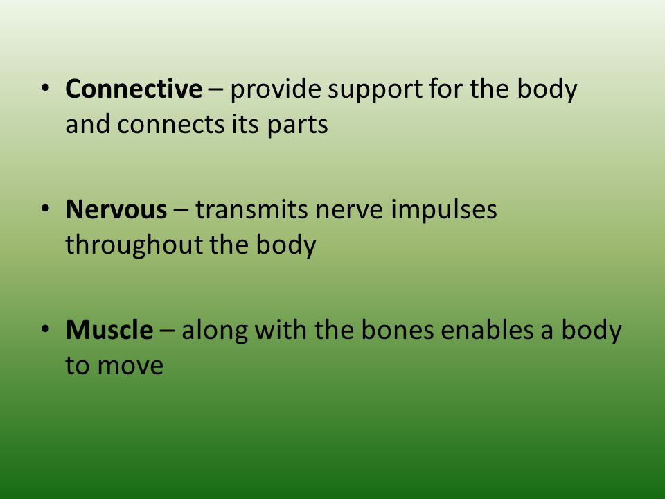 Connective – provide support for the body and connects its parts