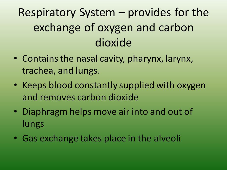 Respiratory System – provides for the exchange of oxygen and carbon dioxide