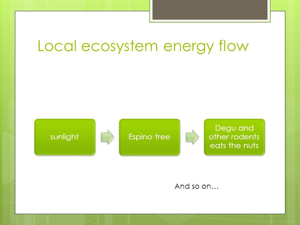 Local ecosystem energy flow