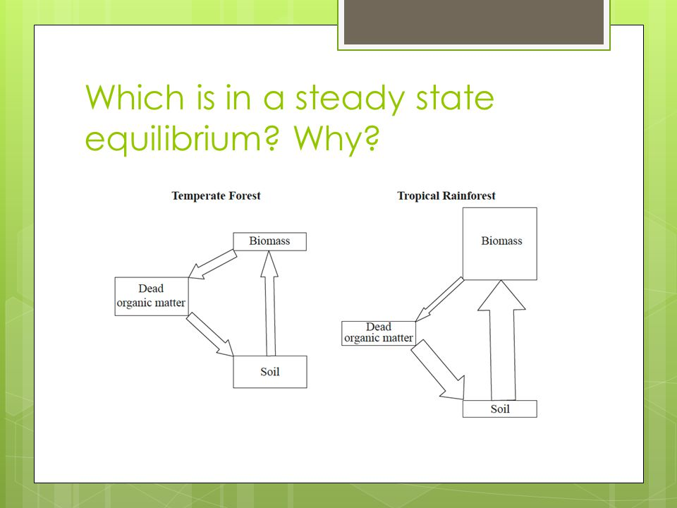 Which is in a steady state equilibrium Why