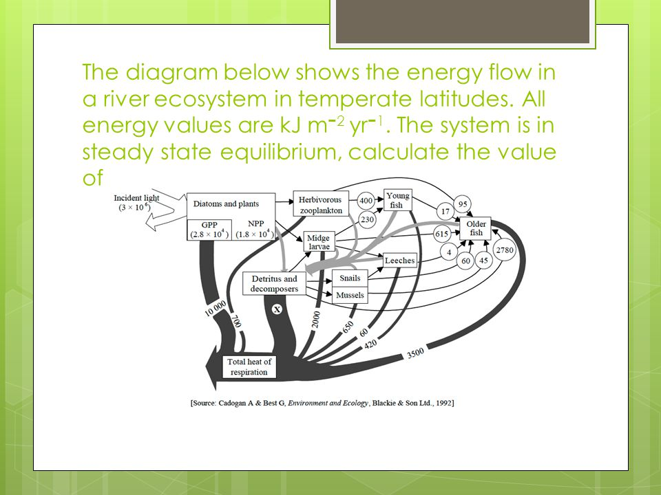 The diagram below shows the energy flow in a river ecosystem in temperate latitudes.