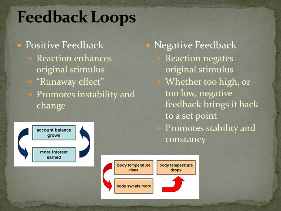 Feedback Loops Positive Feedback Negative Feedback