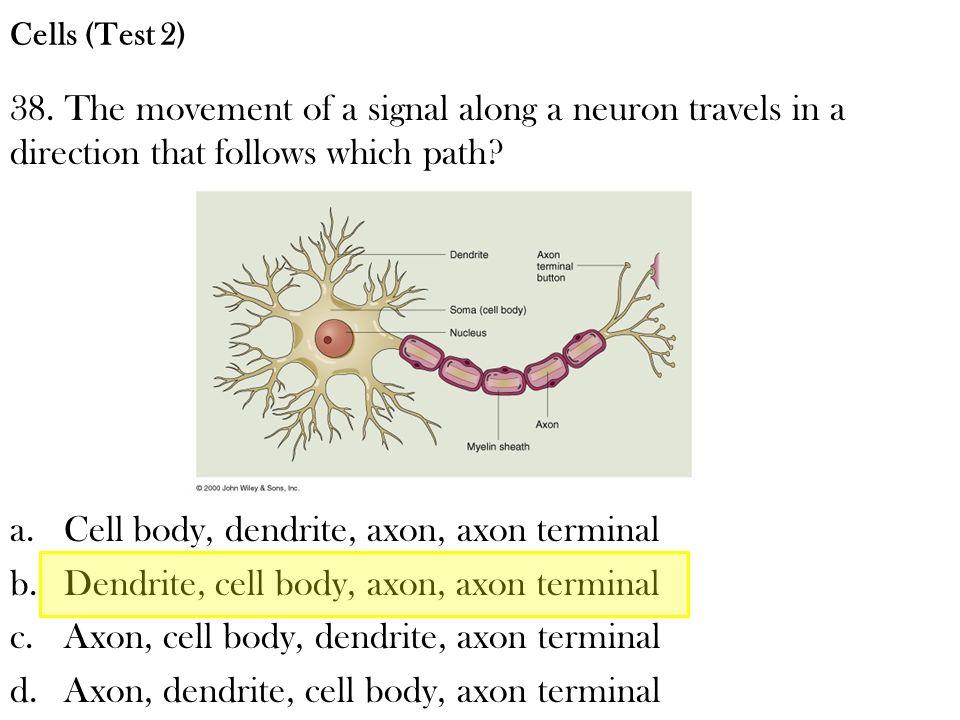 Cell body, dendrite, axon, axon terminal