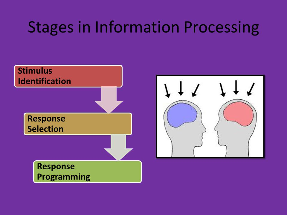 Stages in Information Processing