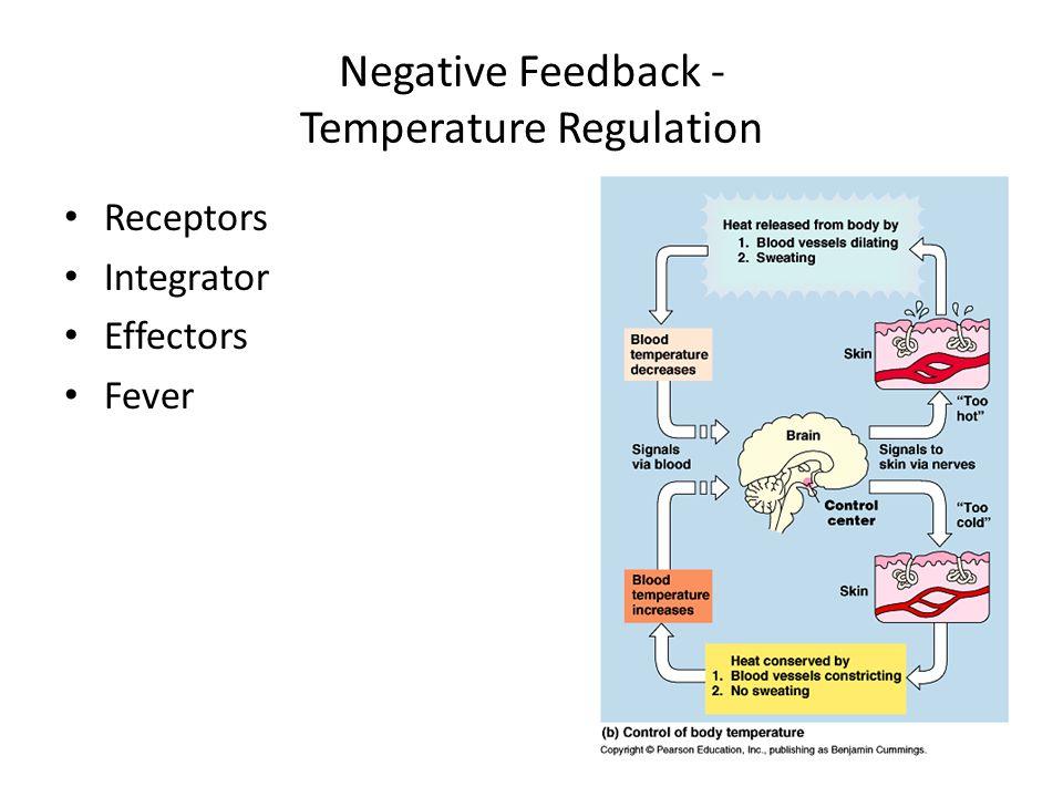 Negative Feedback - Temperature Regulation