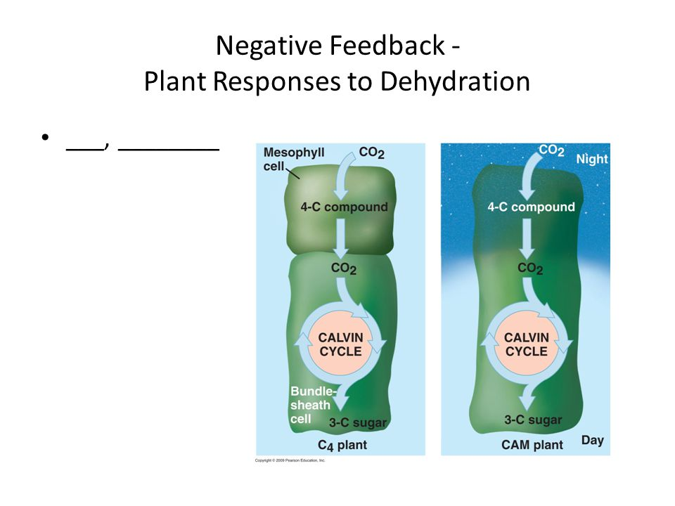 Negative Feedback - Plant Responses to Dehydration