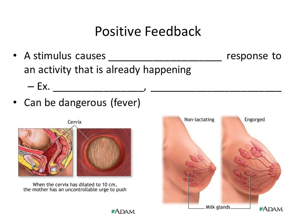 Positive Feedback A stimulus causes ____________________ response to an activity that is already happening.