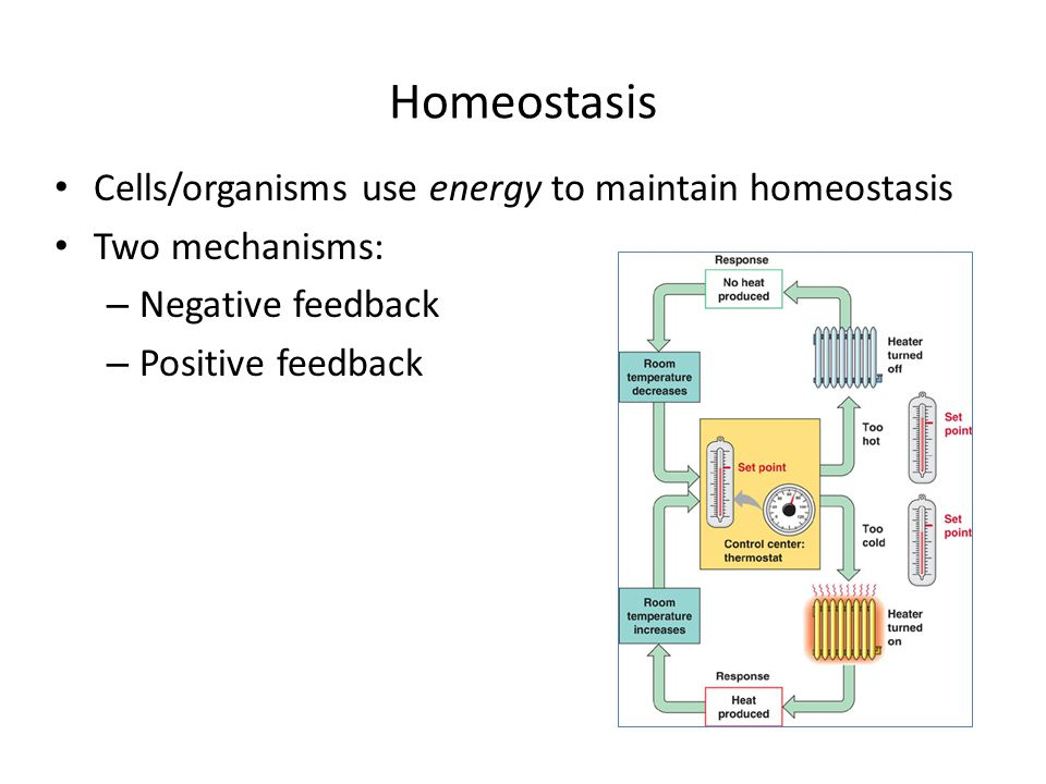 Homeostasis Cells/organisms use energy to maintain homeostasis