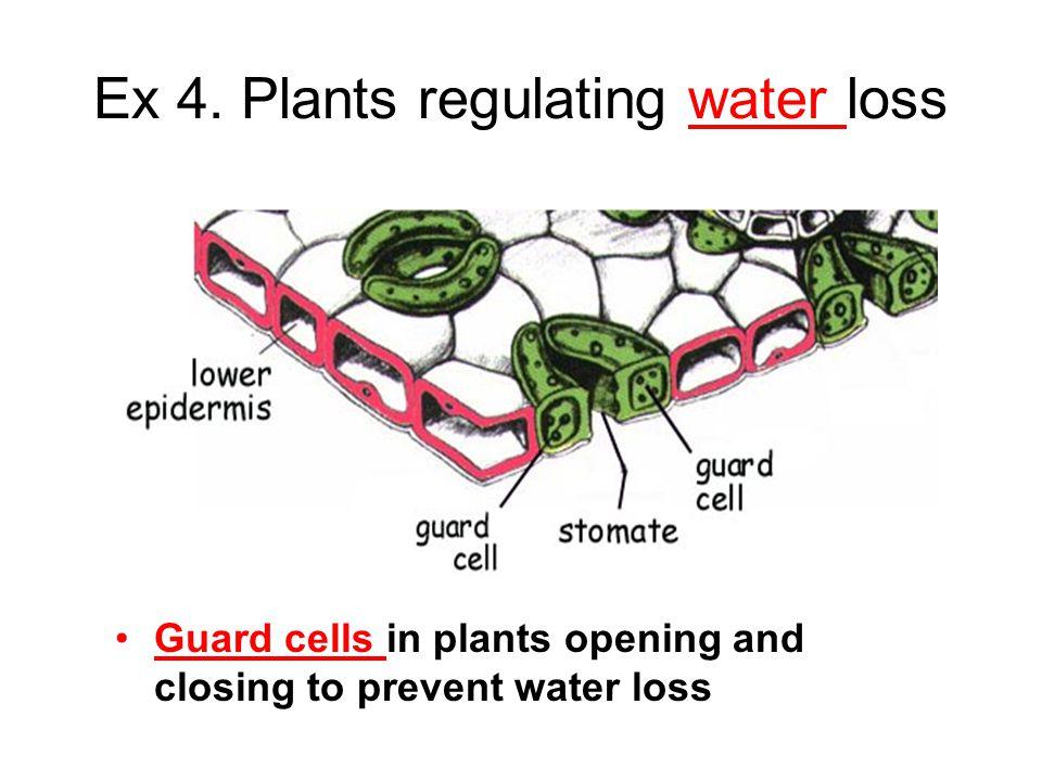 Ex 4. Plants regulating water loss