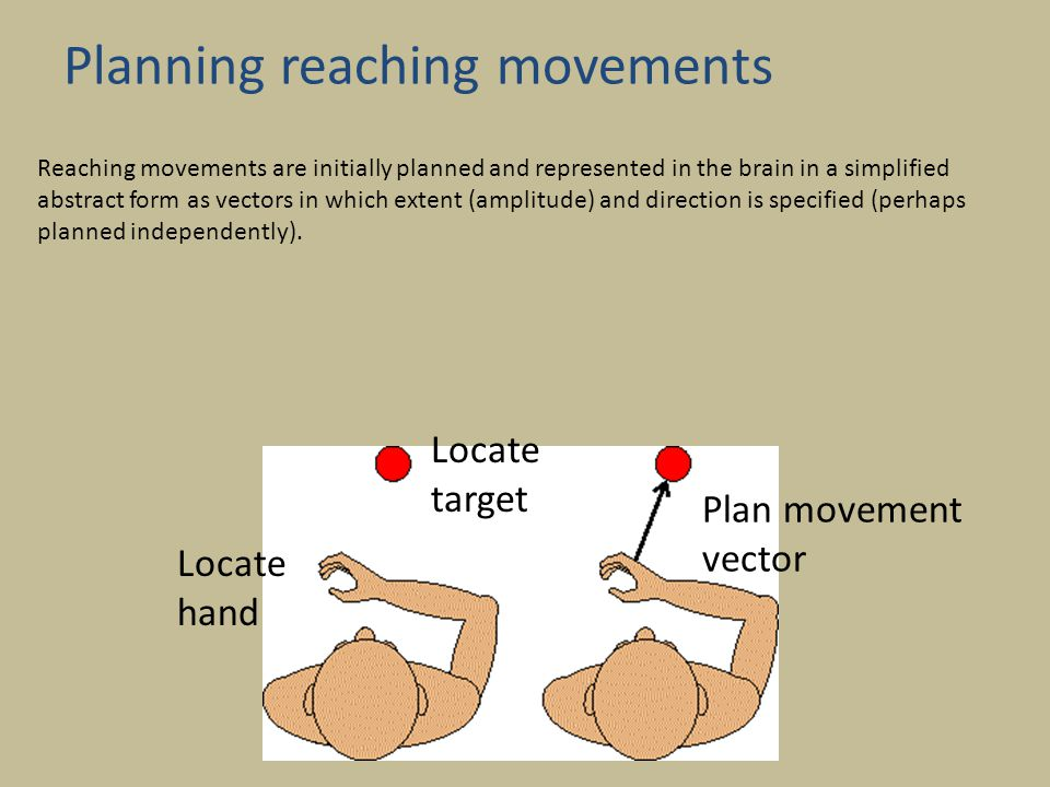 Planning reaching movements