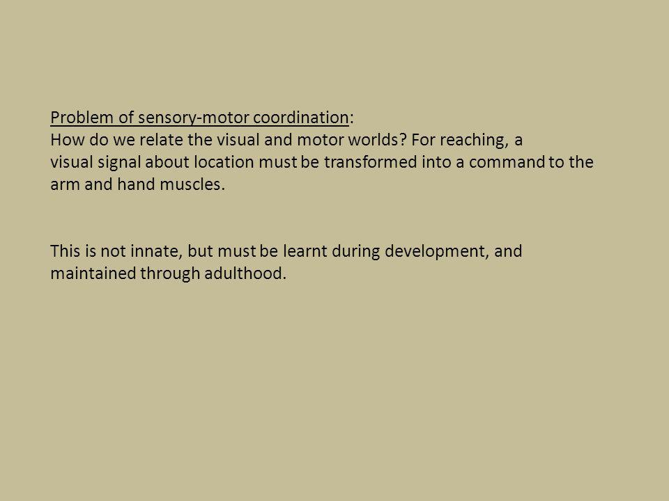 Problem of sensory-motor coordination: