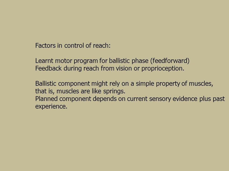 Factors in control of reach: