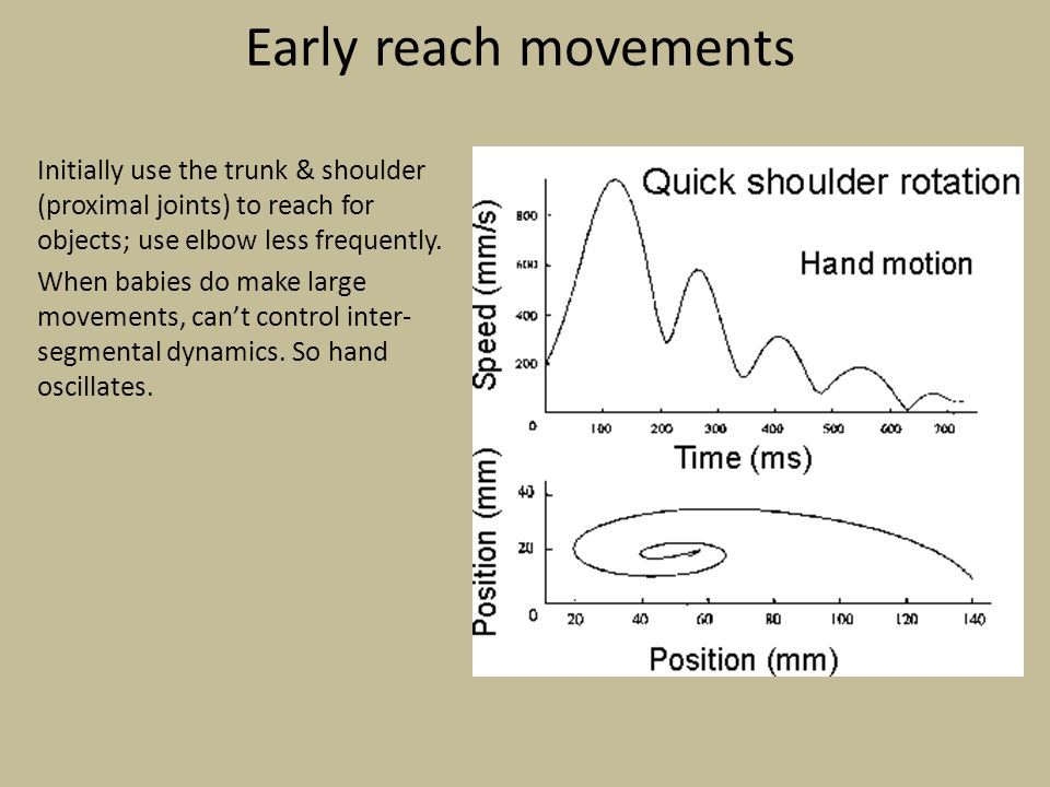 Early reach movements Initially use the trunk & shoulder (proximal joints) to reach for objects; use elbow less frequently.