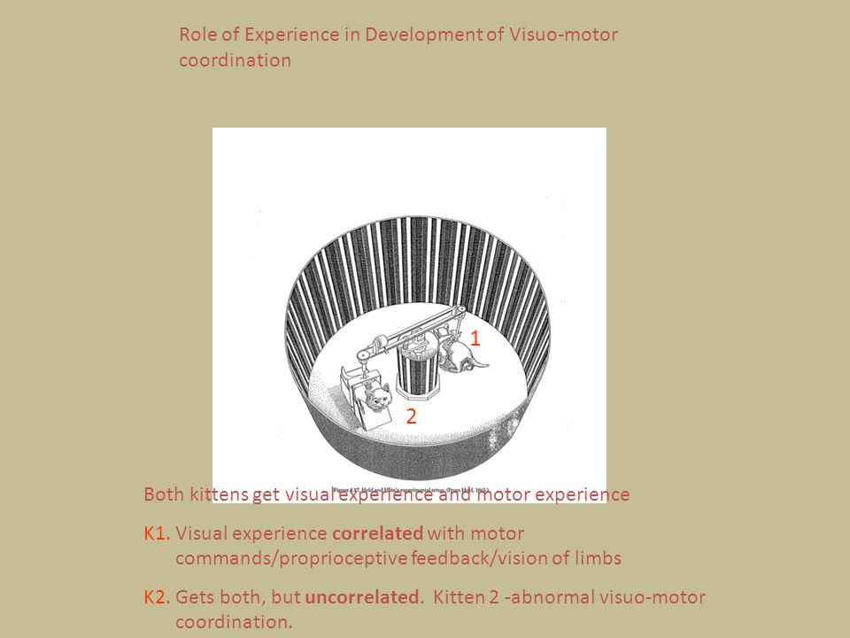 1 2 Role of Experience in Development of Visuo-motor coordination
