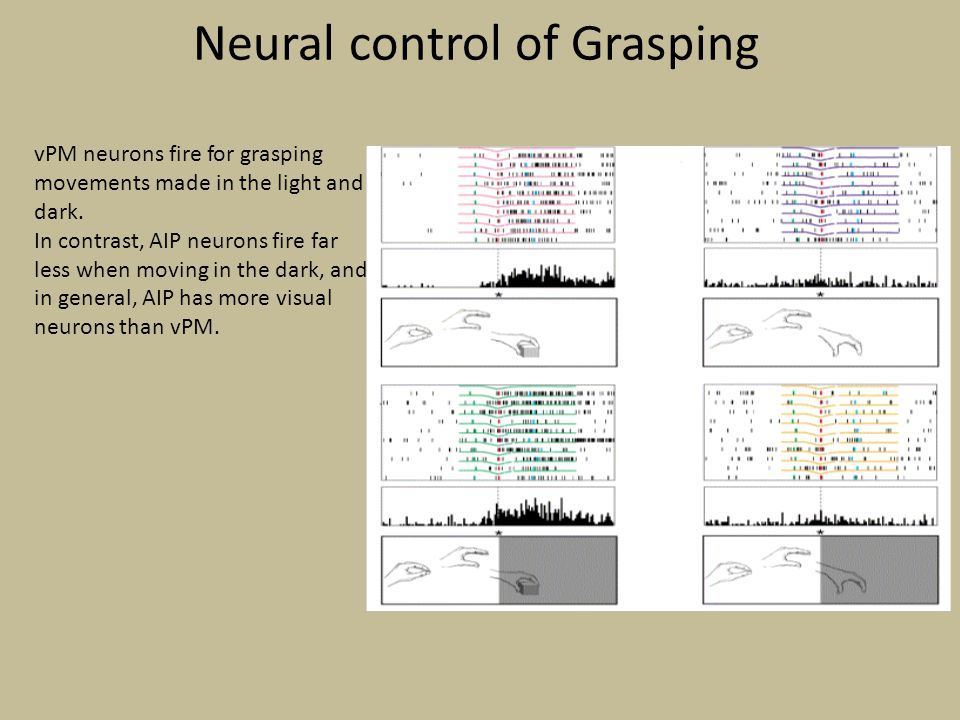 Neural control of Grasping