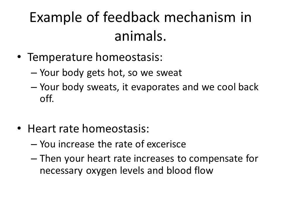 Example of feedback mechanism in animals.