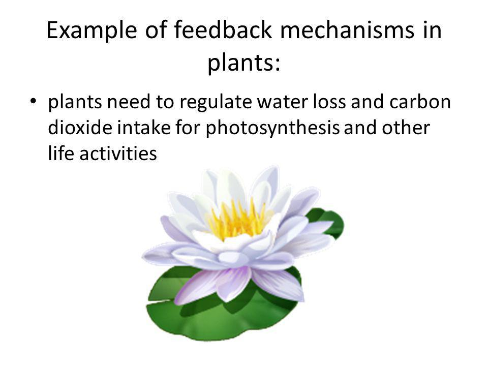 Example of feedback mechanisms in plants: