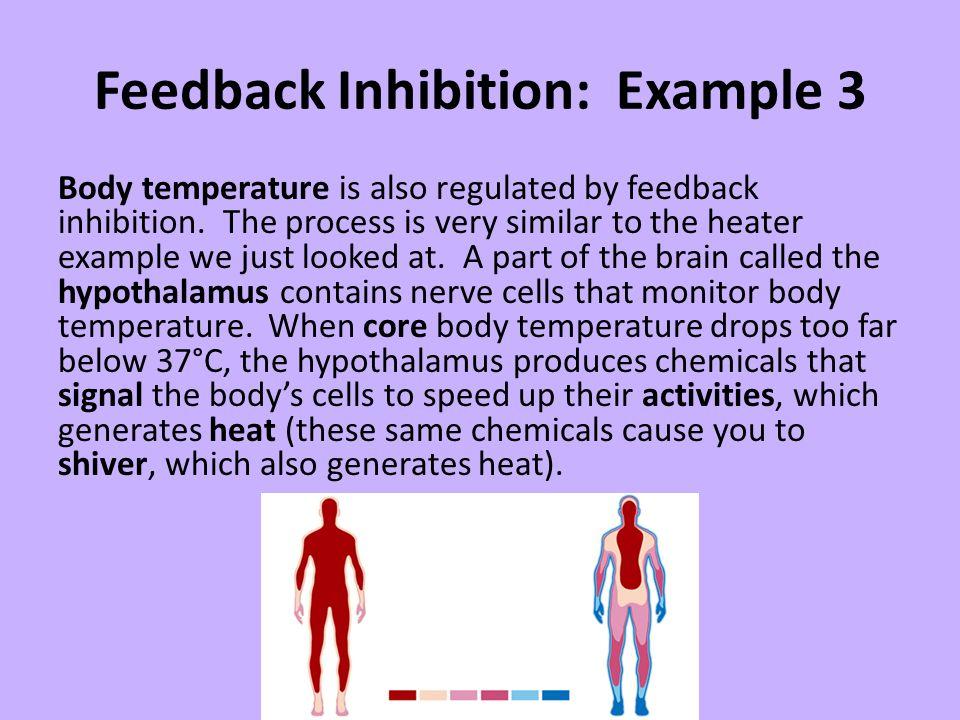 Feedback Inhibition: Example 3