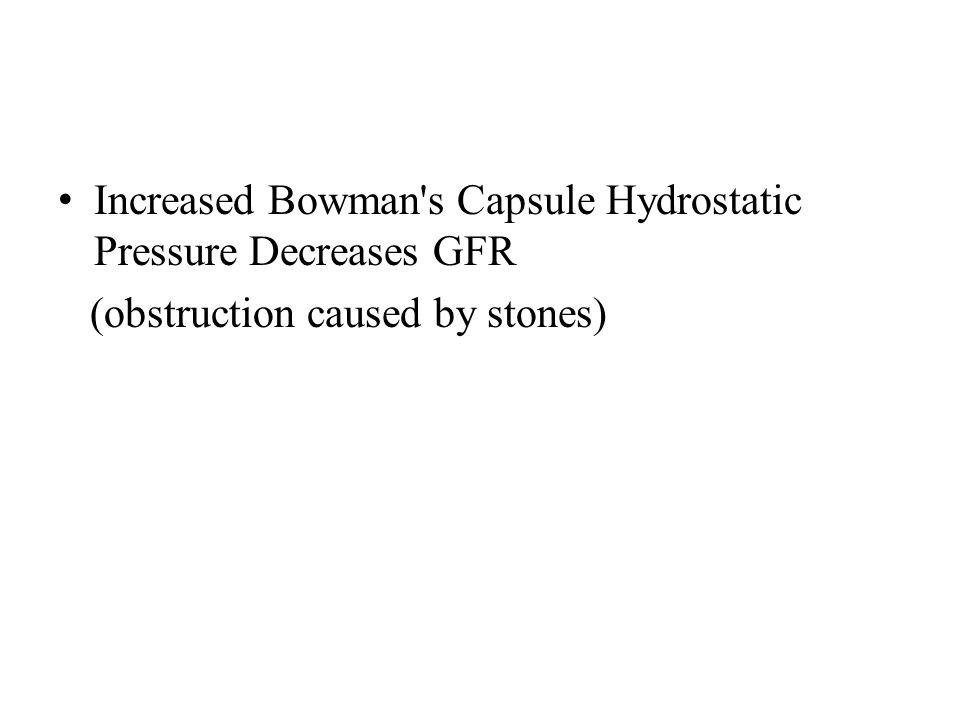 Increased Bowman s Capsule Hydrostatic Pressure Decreases GFR
