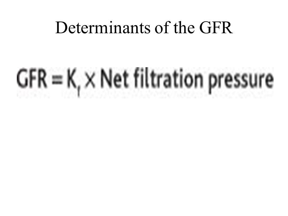 Determinants of the GFR