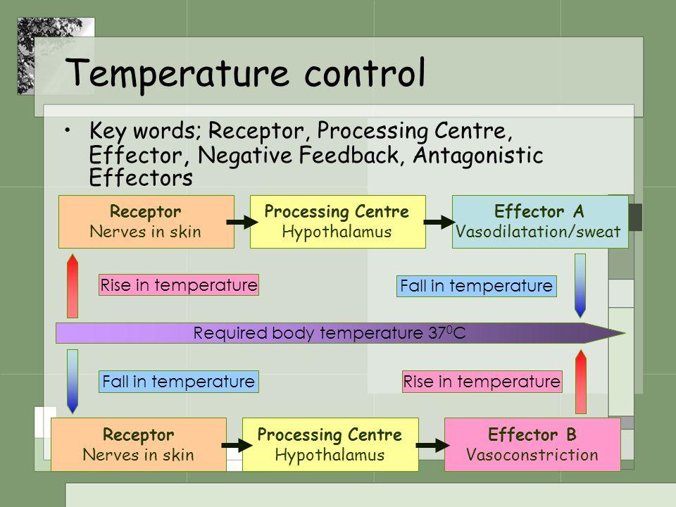 Temperature control Key words; Receptor, Processing Centre, Effector, Negative Feedback, Antagonistic Effectors.