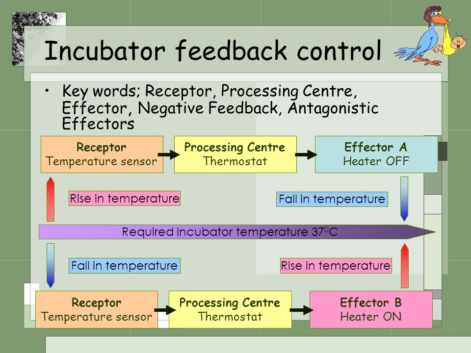 Incubator feedback control