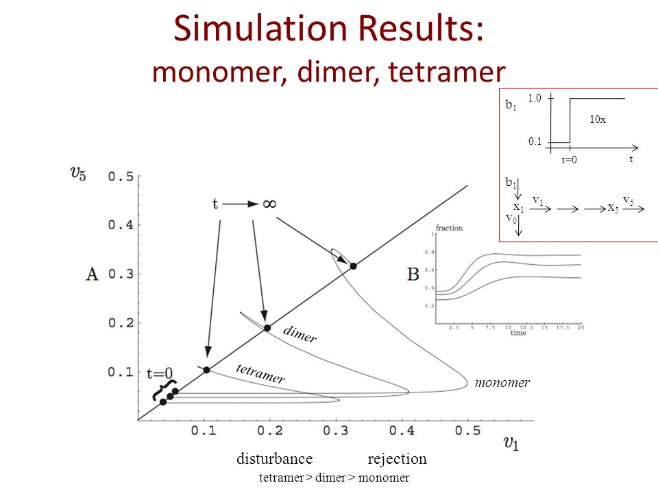 Simulation Results: monomer, dimer, tetramer disturbance rejection