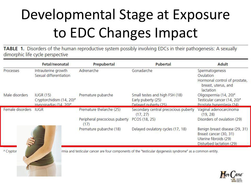 Developmental Stage at Exposure to EDC Changes Impact